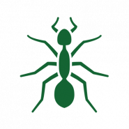 green ant icon