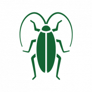green cockroach icon